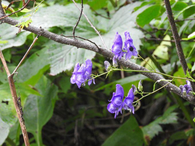 可憐な花の中にこんなスゴイ花も!