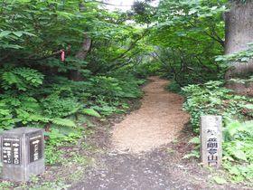 新潟「大佐渡石名天然杉遊歩道」は冷気わたる天然杉美術館!|新潟県|トラベルjp<たびねす>