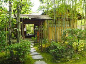 愛知犬山有楽苑、国宝茶室如庵、日本庭園と抹茶を楽しむ旅