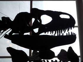 世界が注目するウマの化石も展示中「岐阜県博物館」|岐阜県|トラベルjp<たびねす>