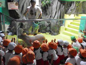 コスパ最高・愛知「蒲郡竹島水族館」ここだけの面白さに満員御礼!|愛知県|トラベルjp<たびねす>