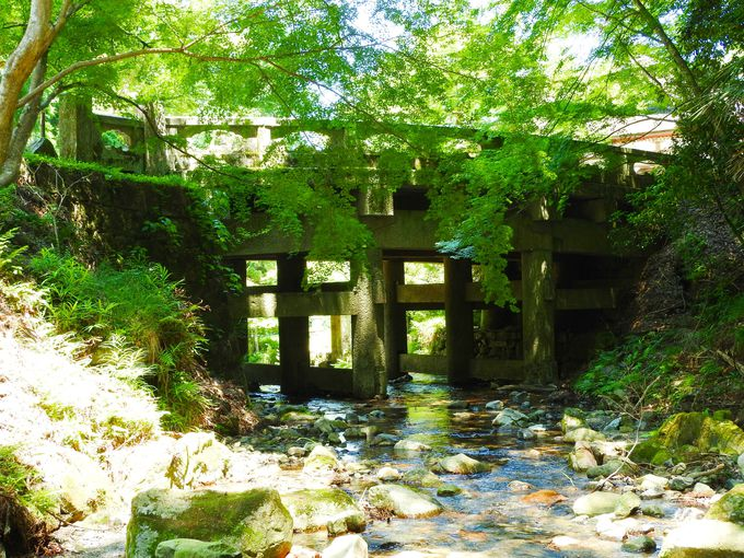 日吉大社、山王鳥居から大宮川の透明なせせらぎ