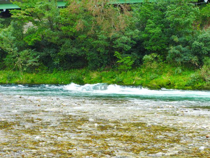 長良川の自然を満喫!