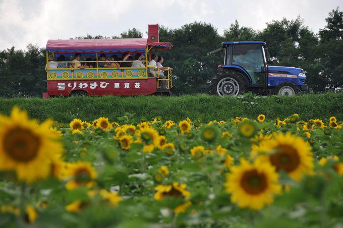 農業用トラクターからゆっくりと鑑賞