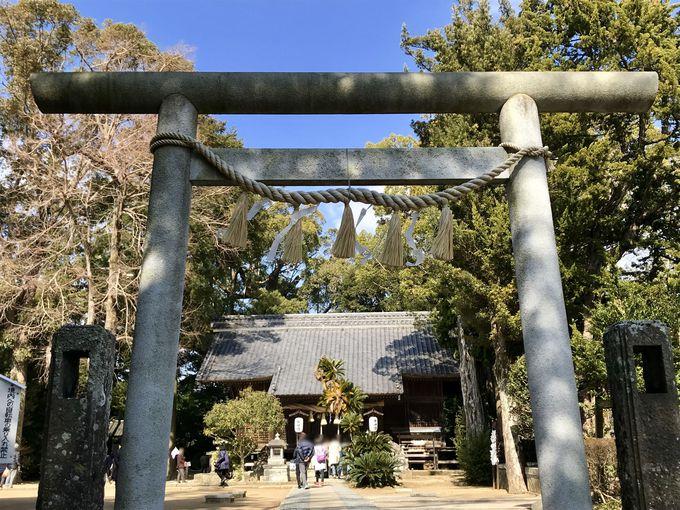 樹齢1000年以上!パワースポット来宮神社の「大クス」