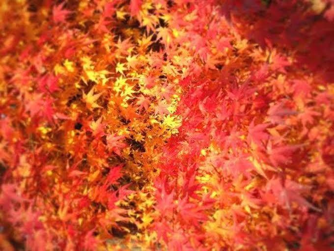 香嵐渓ほど近く!豊田市「城跡公園足助城」紅葉を楽しめる城巡り旅