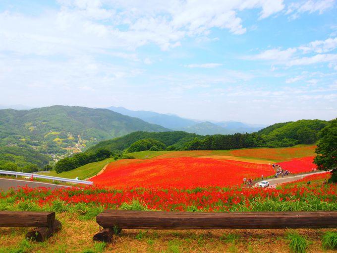 天空を彩る花畑の正体は?