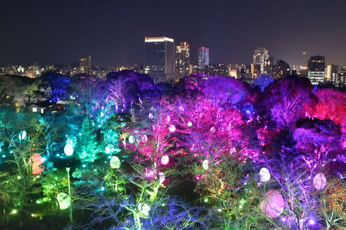 本丸に息吹く木々の光