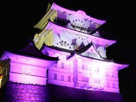 相性で作り出す光のマジックって?「小田原城」冬桜のファンタジー
