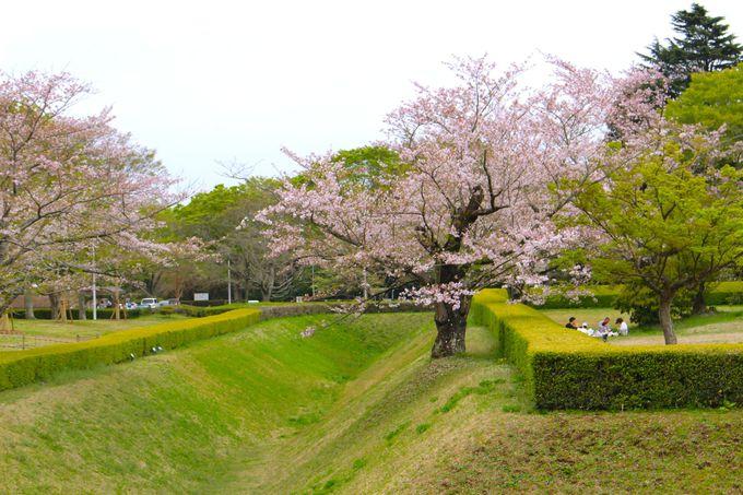 佐倉城と国立歴史民俗博物館は、ピクニック気分で1日中楽しめるサクラの観光名所