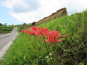 日本の原風景がここに!棚田で有名な長野・姨捨の楽しみ方|長野県|トラベルjp<たびねす>