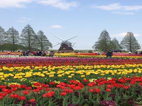 お花ぎっしり!千葉「あけぼの山農業公園」チューリップ花壇は見ごたえ抜群|千葉県|トラベルjp<たびねす>