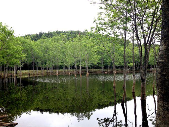魅力2 水面から木がニョキニョキ!霧の日はさらに幻想的に