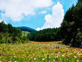 400万輪のゆり&空中散歩!栃木・ハンターマウンテン塩原の夏はリフトでお花見!