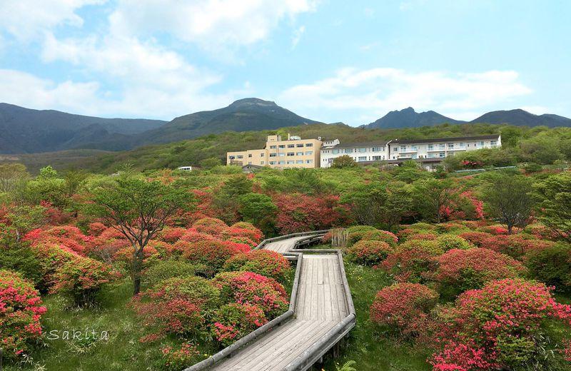 天空の花回廊!那須「八幡つつじ群落」はピンクに萌え上がる