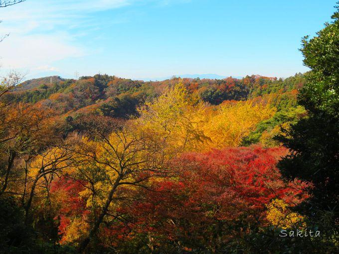 天園ハイキングコースの分岐「獅子舞」とは紅葉の名所