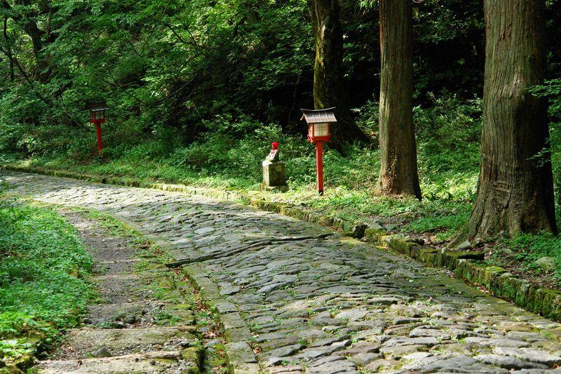 大山の原生林に覆われたパワースポット・鳥取「大神山神社」