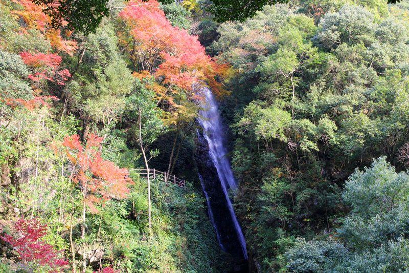 輝く紅葉と龍馬が渡った橋。伊予・大洲「白滝」と「屋根付き橋」巡り