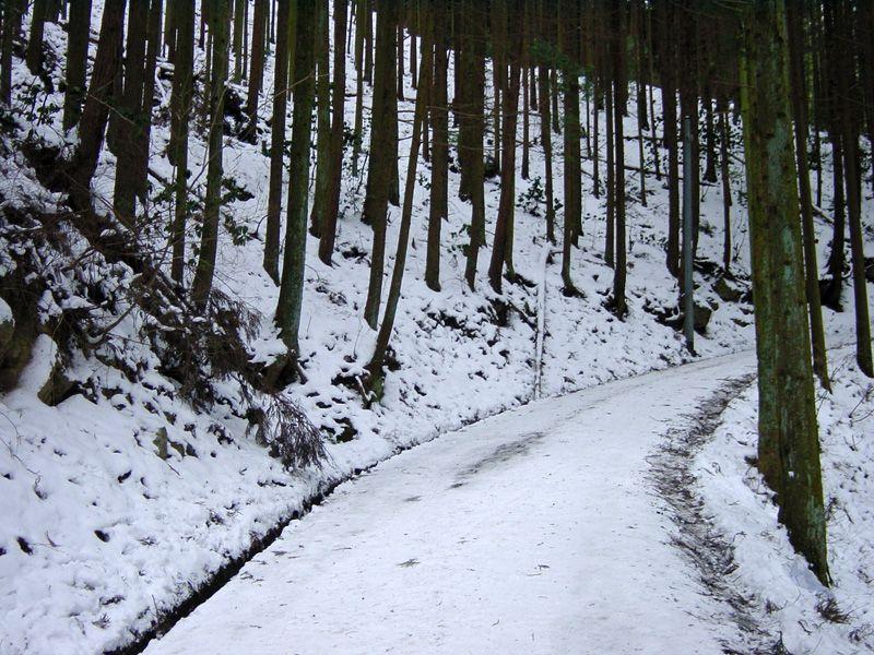 雪の林道と遊歩道を楽しみながら、いざ氷瀑へ!
