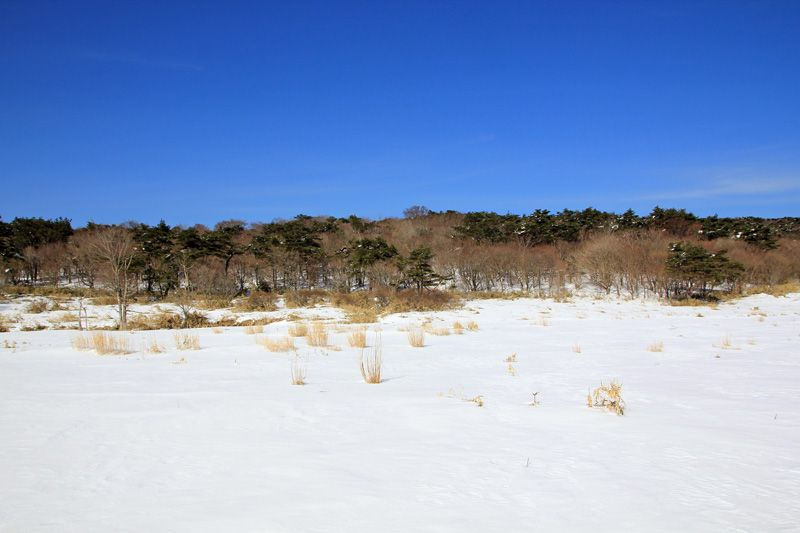 皿ヶ嶺のお皿の中は真っ白な雪景色
