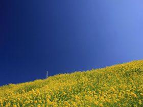 どこまでも続く海と菜の花とローカル線!愛媛・双海町の絶景|愛媛県|トラベルjp<たびねす>