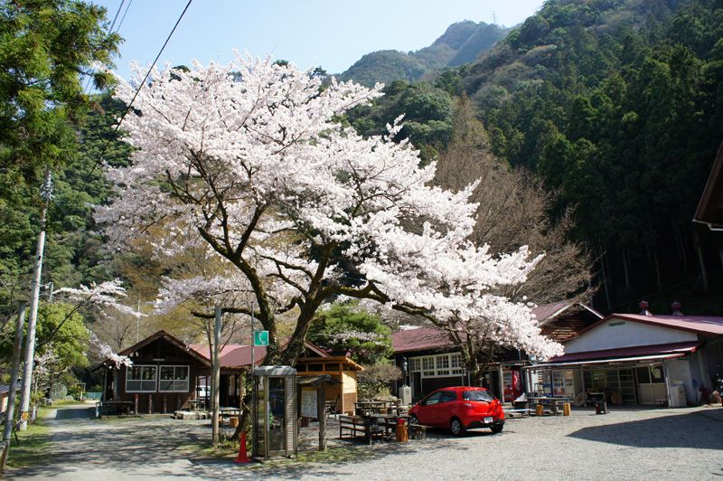 桜咲く山村でキャンプやコテージ!愛媛「石鎚ふれあいの里」