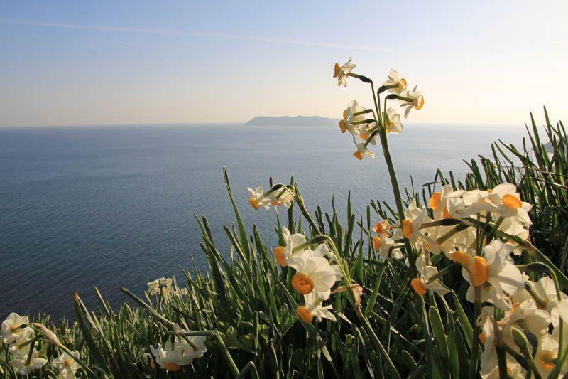 冬の淡路島「灘黒岩水仙郷」で一足早い春を楽しもう