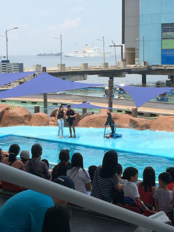 マニラ湾を背景に野外ステージで盛り上がるアシカのショー
