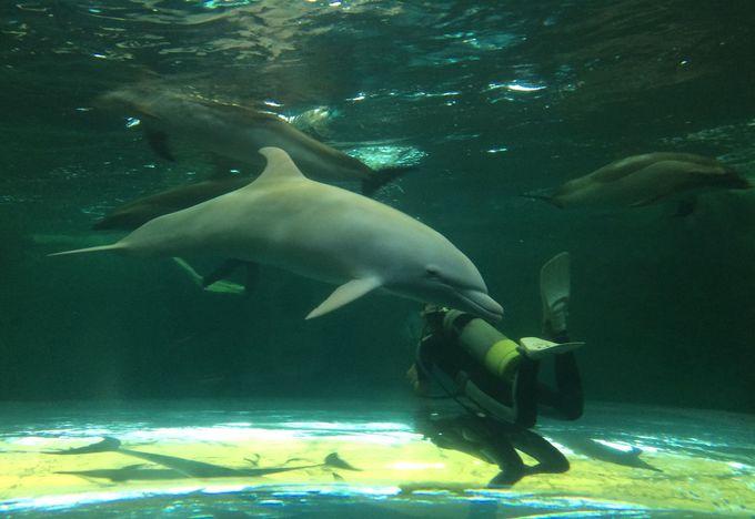 ココでしか見られない、クジラ&イルカの珍しいもの