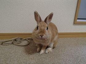 ウサギが部屋を訪問!和歌山の「BKウィークリー&ホテル」|和歌山県|トラベルjp<たびねす>