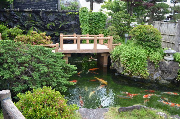 有名人も鯉のオーナー、庭園で錦鯉を楽しもう