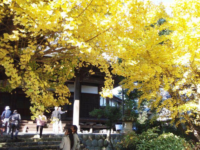 祐専寺でひと休み