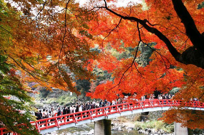東海を代表する紅葉の名所「香嵐渓」