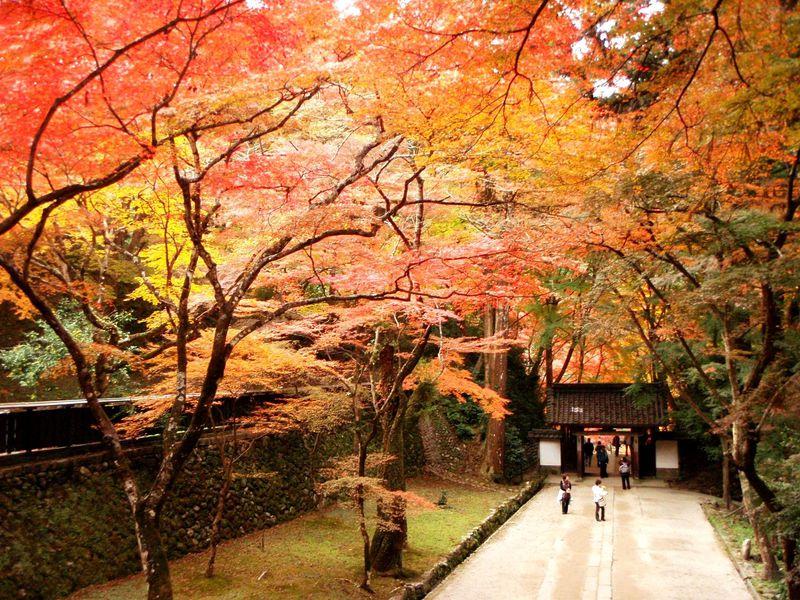 紅葉も楽しめる山!愛知・香嵐渓「飯盛山」で運動不足も解消