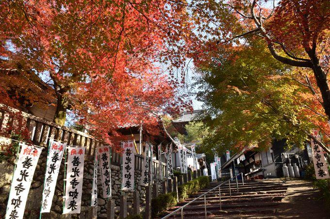 紅葉も美しいお寺