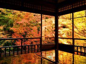 期間限定!これが京都「瑠璃光院」の絢爛たる紅葉美