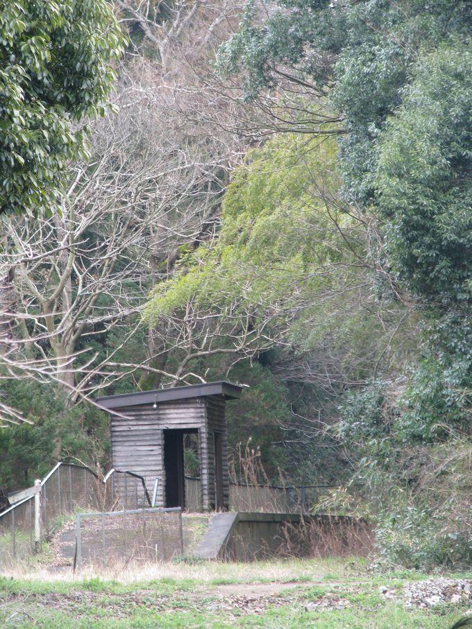 雑木林の中にひっそりと佇む廃駅。坂戸駅跡。