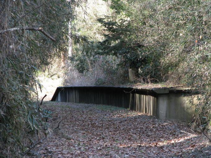 森の中に突如現れるプラットホーム。八木蒔駅跡。