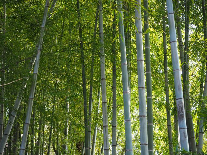 トトロの木が見守る日本庭園は、なんと広さ1万坪!