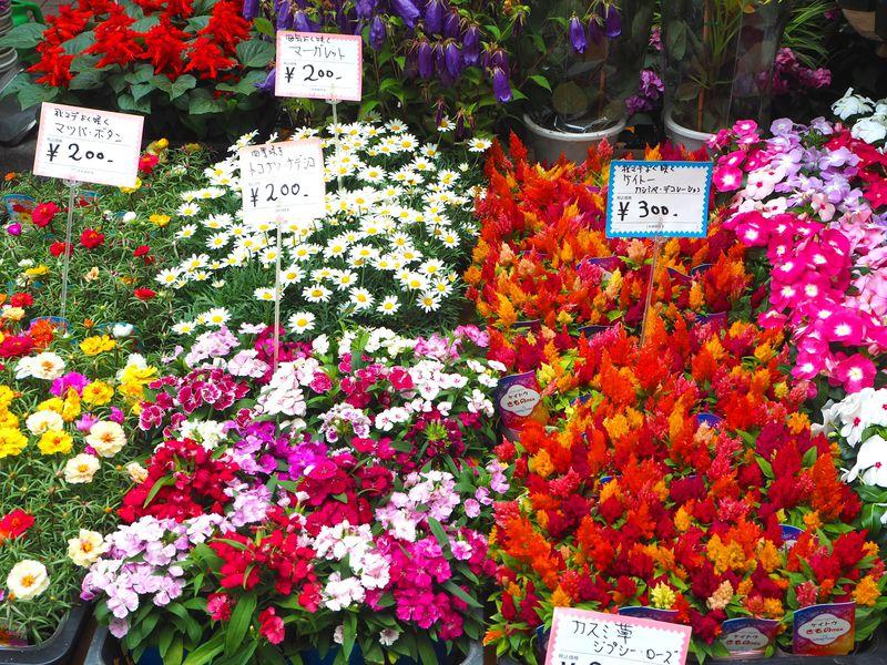 女子にもおすすめ!6月最後の週末は浅草の「植木市」を要チェック