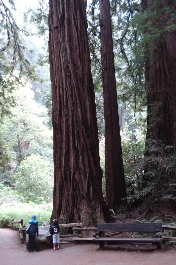 樹齢1000年!恒久の自然に浸る