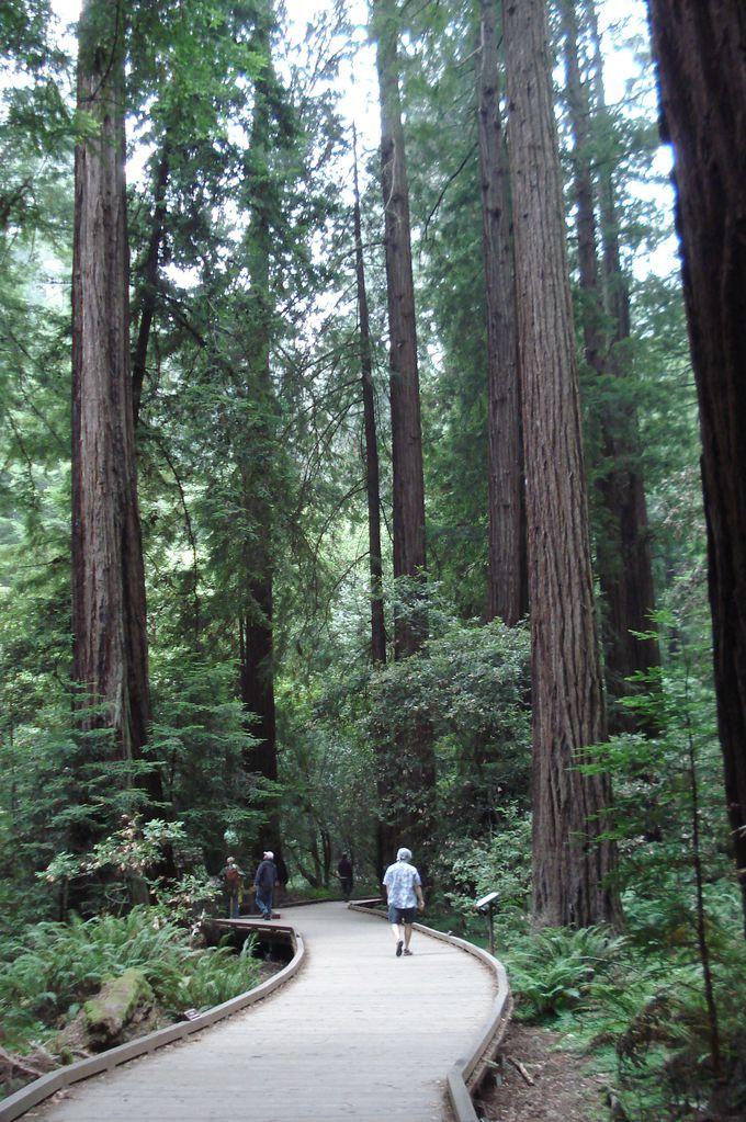 自然の声を聞きながら、ゆったり森林浴!