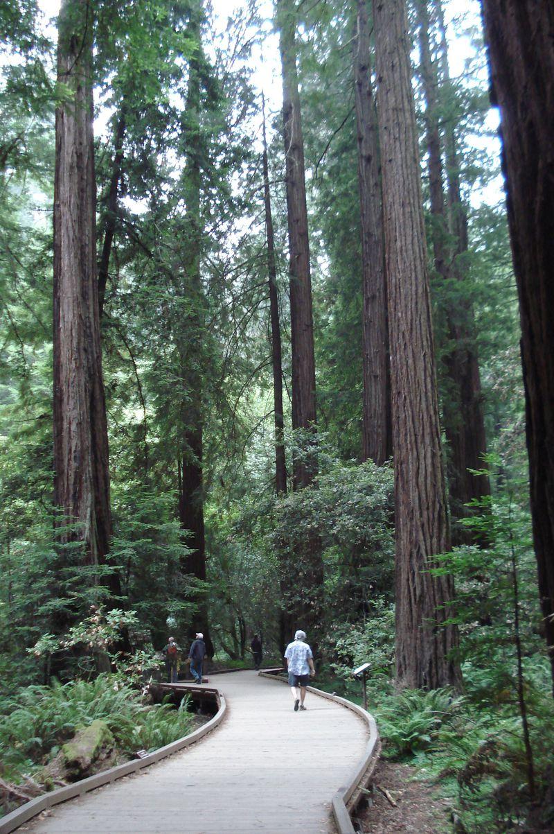 サンフランシスコから日帰り森林浴!ミュアウッズ国定公園の大樹に癒される