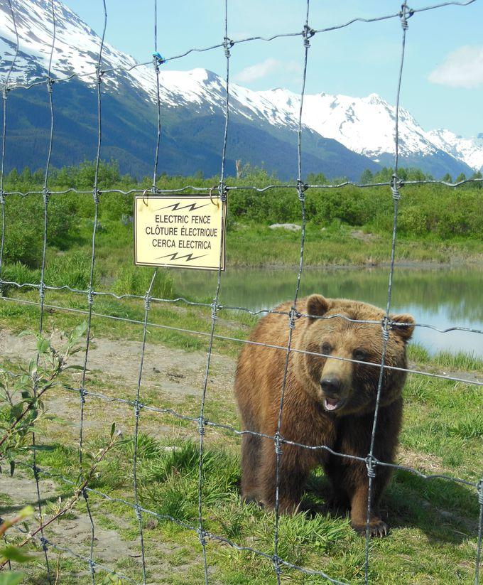 アラスカの野生動物に会える!