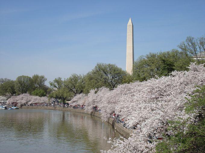 桜の名所に、キング牧師の記念碑