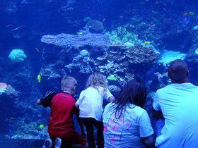 世界最大の水族館も!アトランタで絶対に外せない場所4選