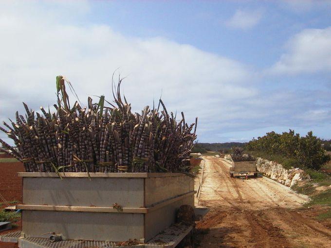 島の基幹産業はさとうきび栽培