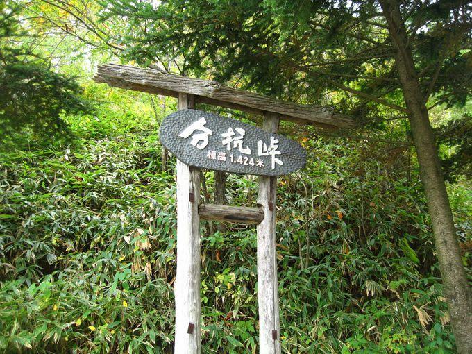 伊那市と大鹿村の境を成す「分杭峠」に到着