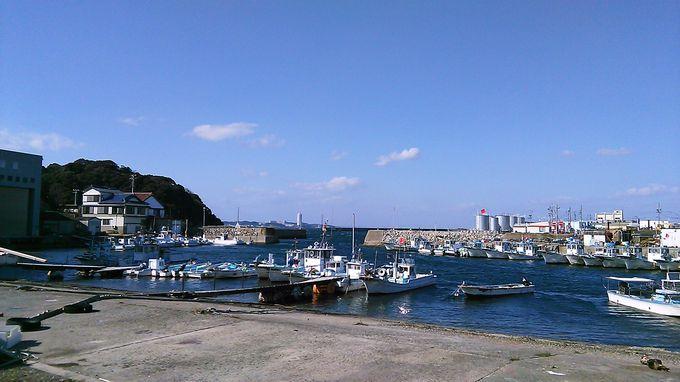 船を降りて海沿いを歩くと島らしい風景が見えてきます