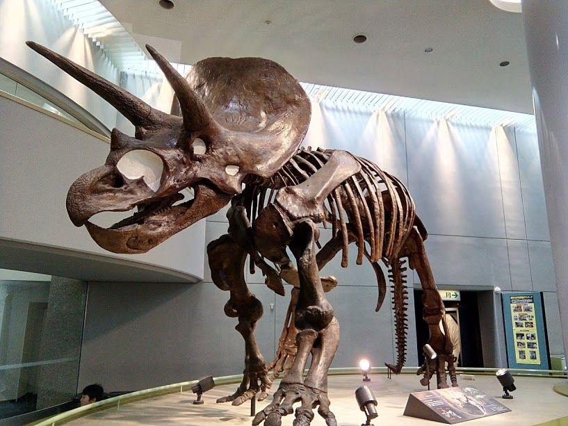恐竜の展示で有名な豊橋市自然史博物館